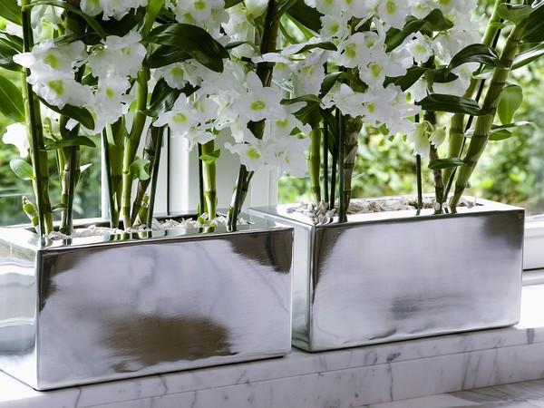 Orchidée bambou