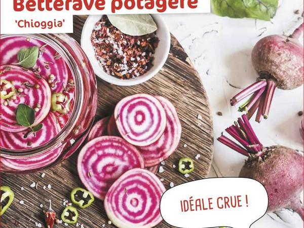 Betterave potagère Chioggia