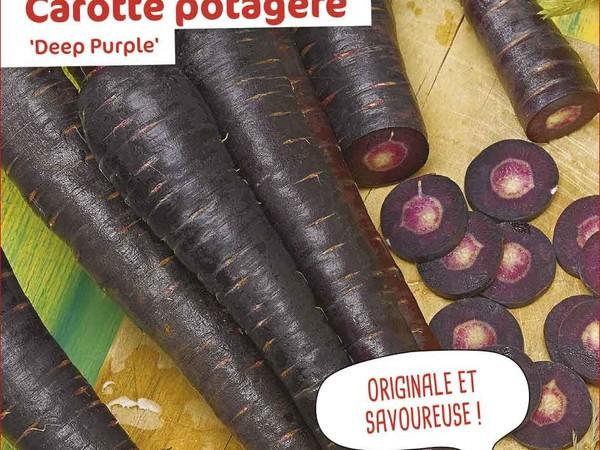 Carotte potagère Deep Purple