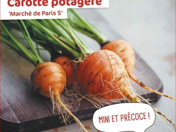 Carotte potagère Marché de Paris 5