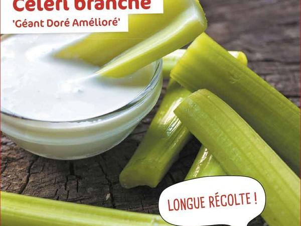 Celeri branche Géant Doré Amélioré