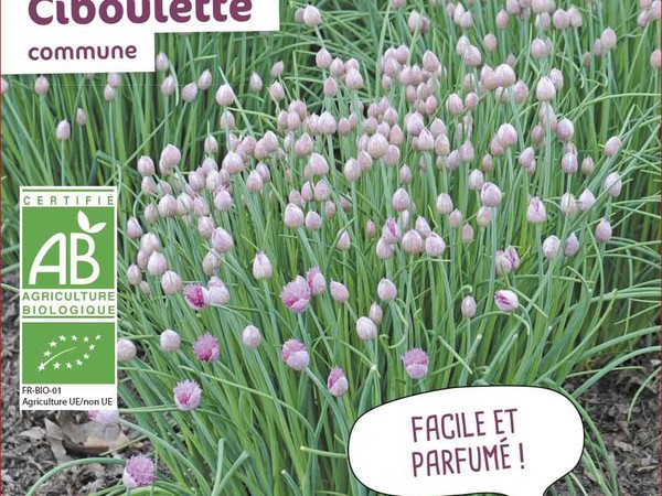Ciboulette Commune