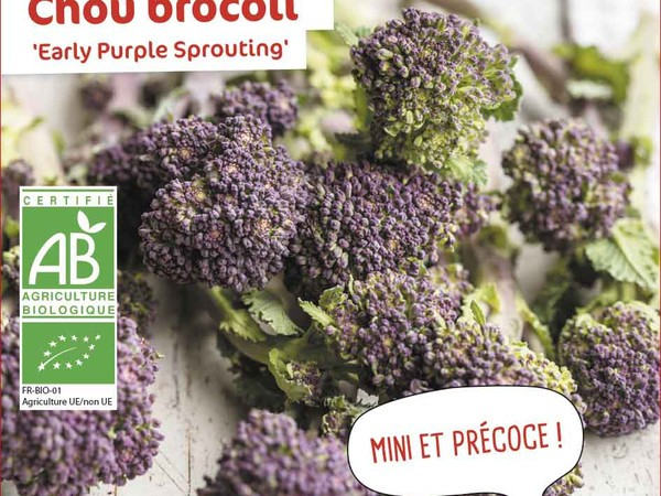 Chou brocoli  Early Purple Sprouting