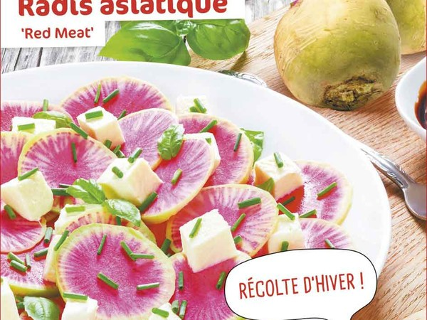 Radis asiatique Red meat