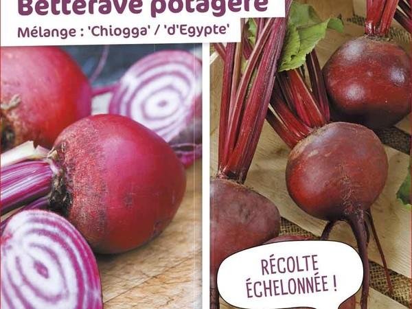 Betterave potagère Mélange : Chiogga / d'Egypte