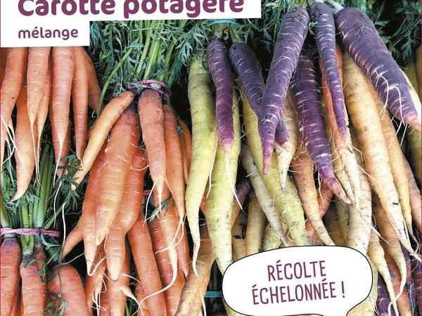 Carotte potagère Mélange