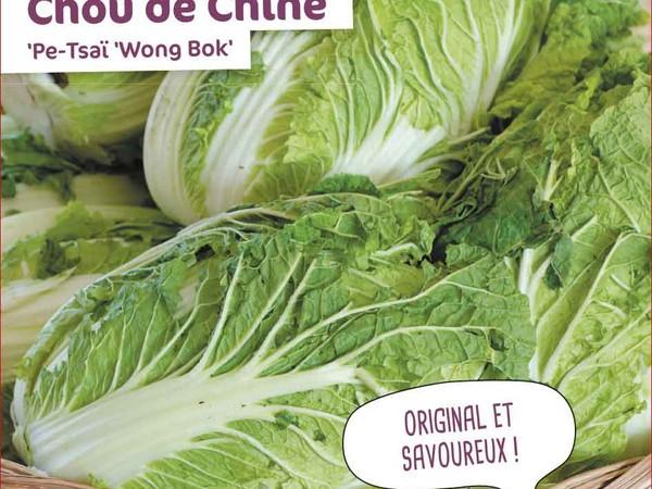 Chou de chine Pe-Tsaï Wong Bok
