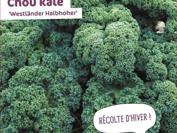 Chou kale Westlander Halbhoher