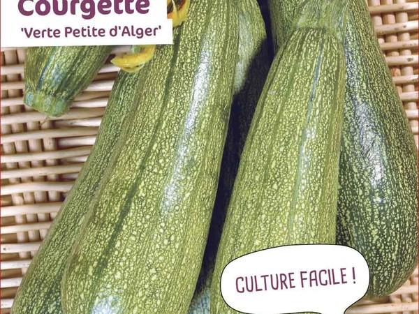 Courgette Verte Petite d'Alger
