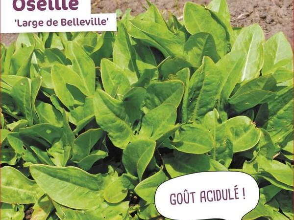 Oseille Large de Belleville