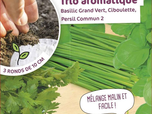 Trio aromatique Basilic Grand Vert, Ciboulette, Persil Commun 2