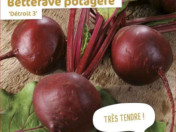 Betterave potagère Détroit 3
