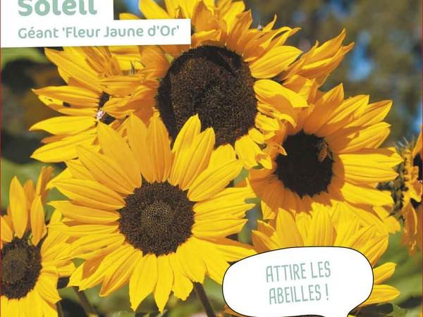 Soleil Géant Fleur Jaune d'Or