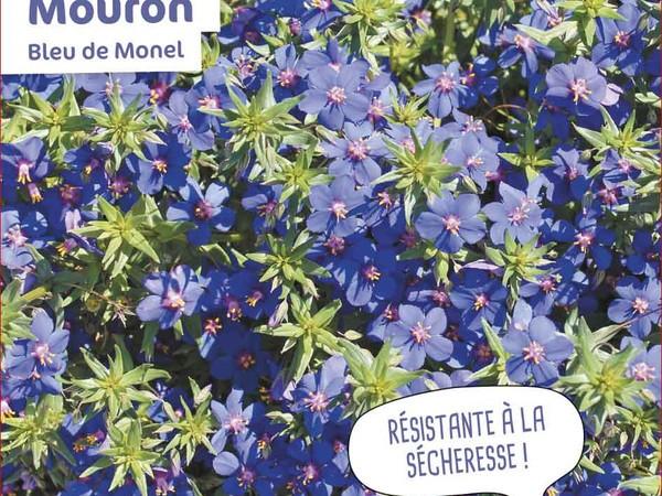 Mouron Bleu de Monel