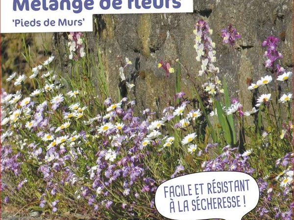 Mélange de fleurs Pieds de murs