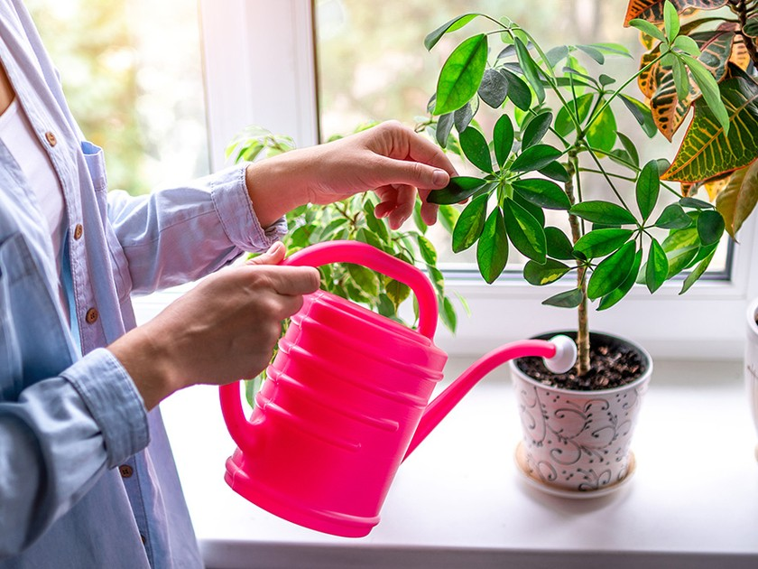 Entretien des plantes