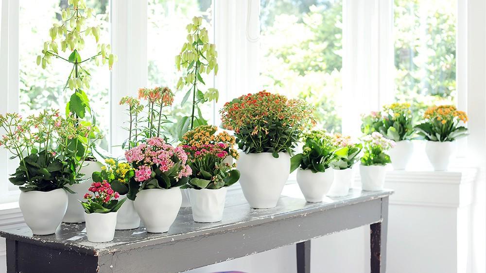 choisir-plantes-interieur-2.jpg