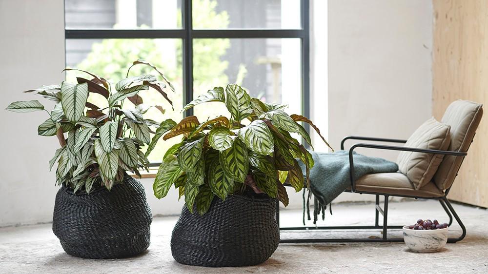 choisir-plantes-interieur.jpg