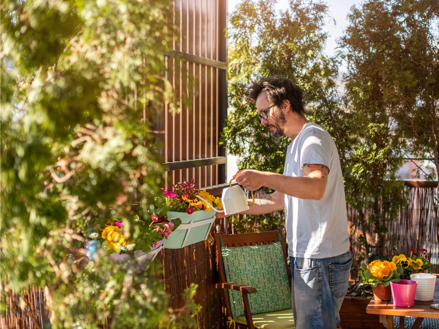 Quelles Plantes Brise Vue Pour Votre Balcon Ou Votre Terrasse Silence Ca Pousse