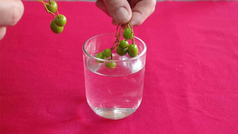 Photophore végétal 2