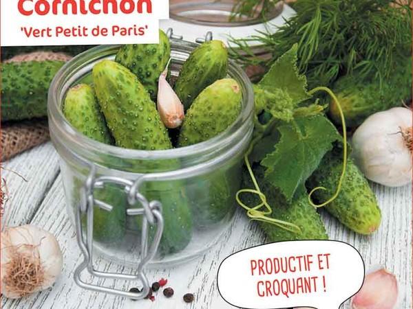 Cornichon Vert Petit de Paris