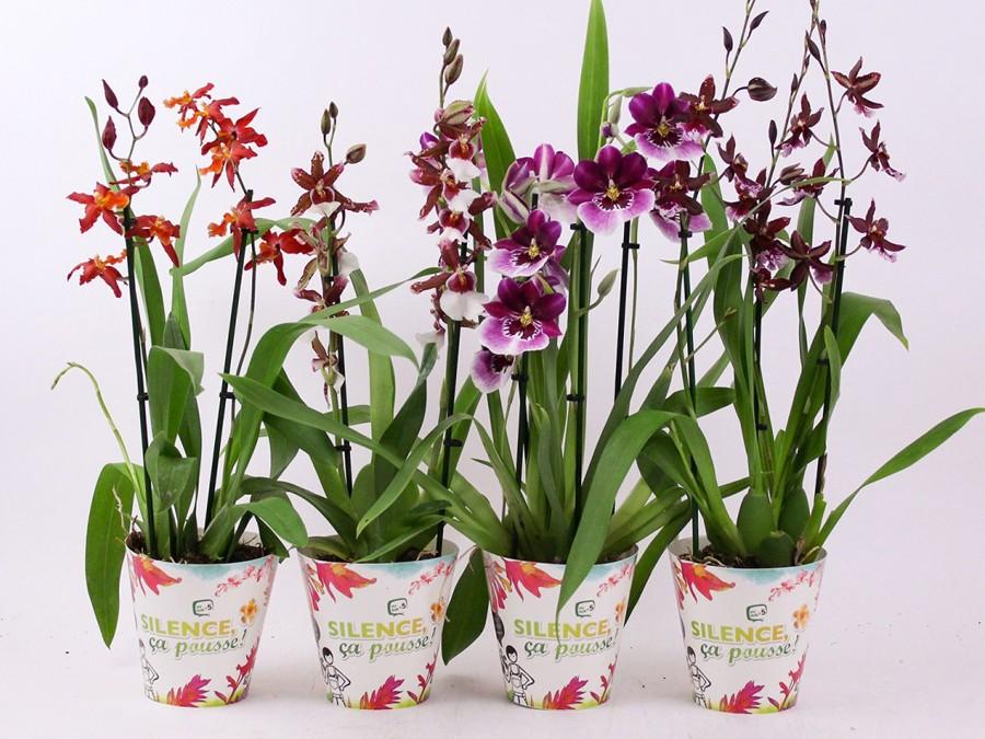 Orchide parfume