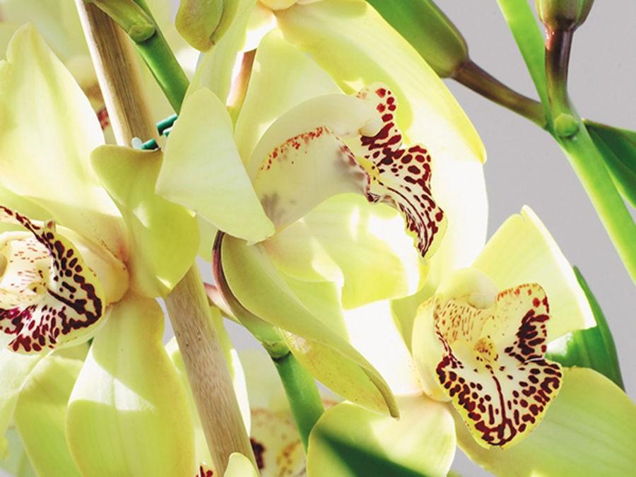 ENTRETIEN DES ORCHIDEES : LE GUIDE COMPLET