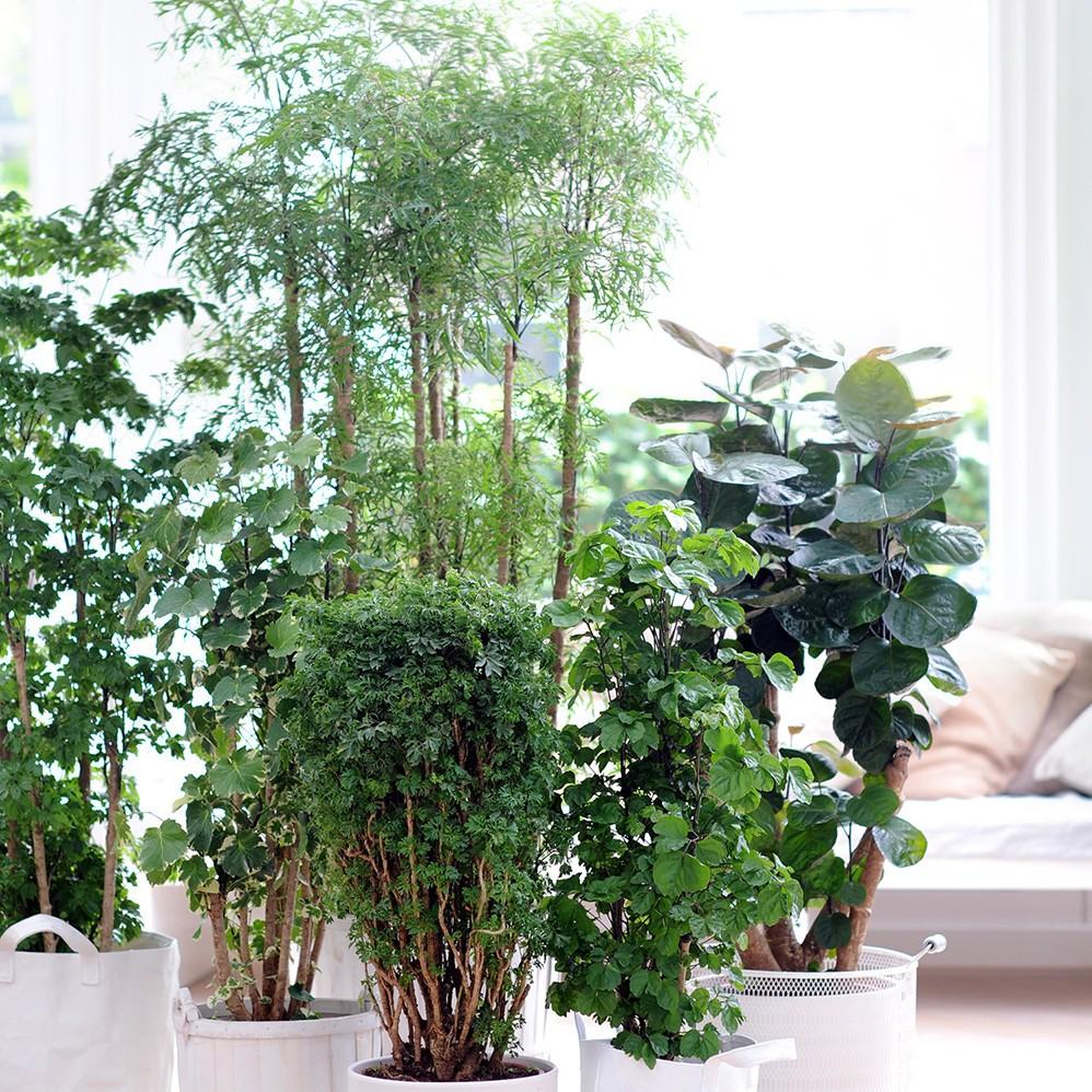 Entretien-PlantesInterieur.jpg