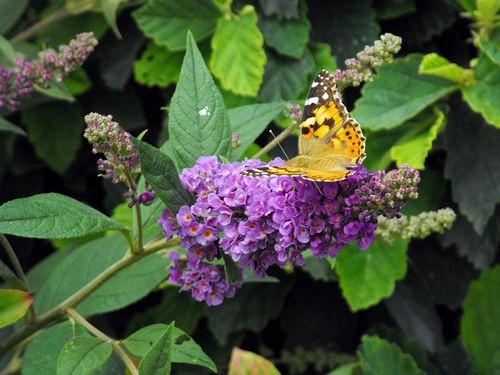 15 PLANTES INCONTOURNABLES POUR FLEURIR VOTRE ÉTÉ